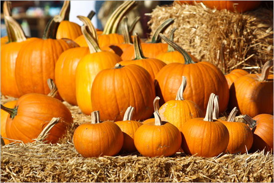 Pumpkins, Corn Mazes and Fields of Fright!