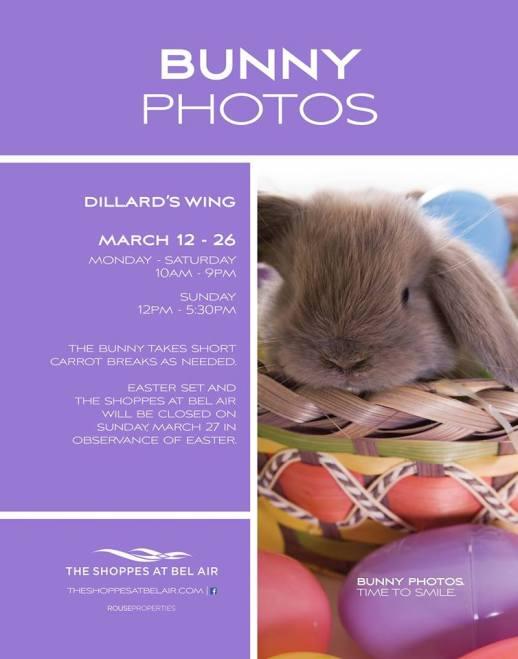 Bunny Photos
