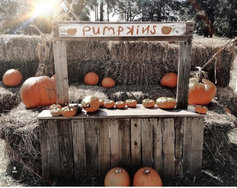 christ-united-methodist-church-pumpkin-patch-2